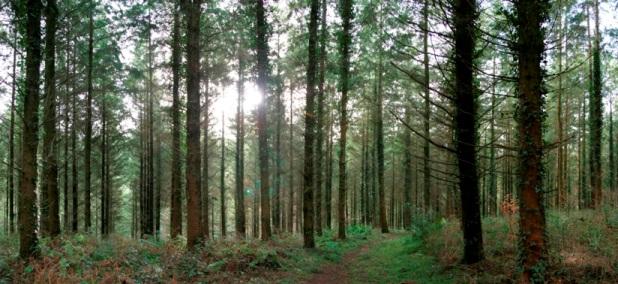 trees-small.jpg